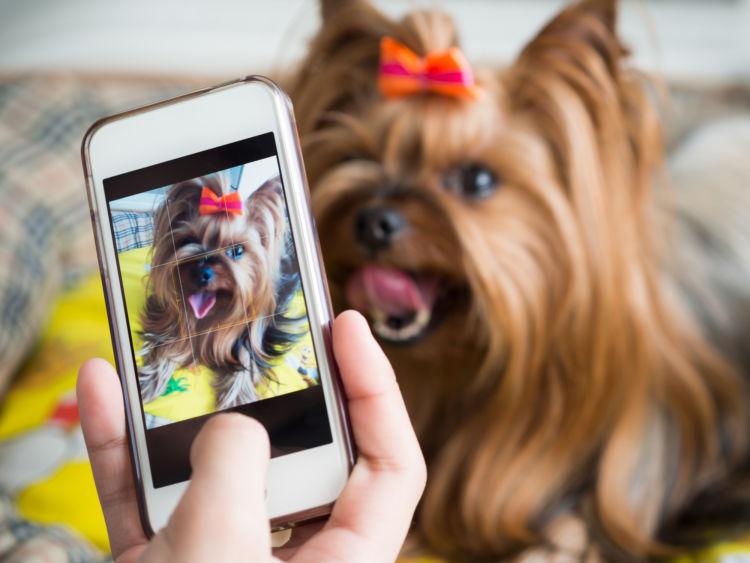 誤飲の応急処置・対処法④【動物病院に犬の今の状態を伝える】