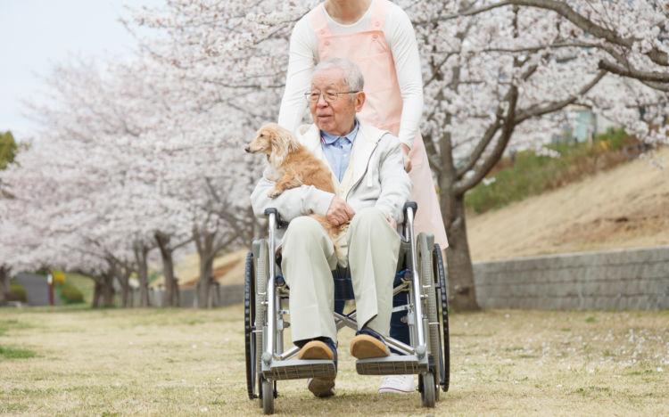 しそ ロスマリン酸 アルツハイマー 認知症予防 高齢者 犬