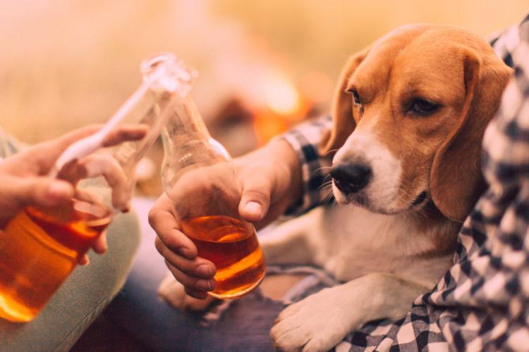 【獣医師監修】犬が人間用のアルコール(お酒)を飲んだり、舐めたりしても大丈夫?死亡リスクあり!