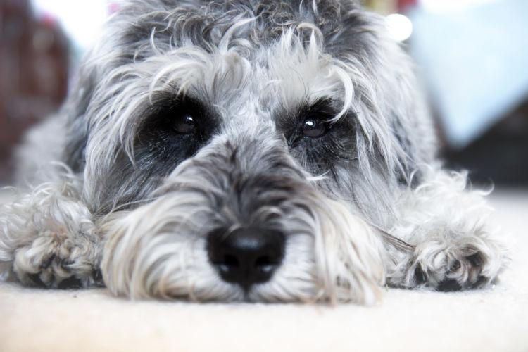老犬の下痢【発症しやすい犬】