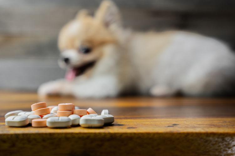 老犬の震え(振戦)に処方されることがある薬の例