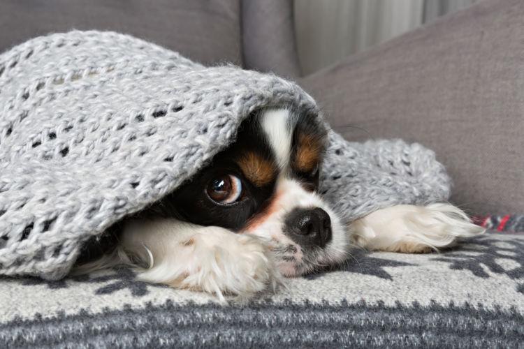 老犬の震え(振戦)【予防・対策】