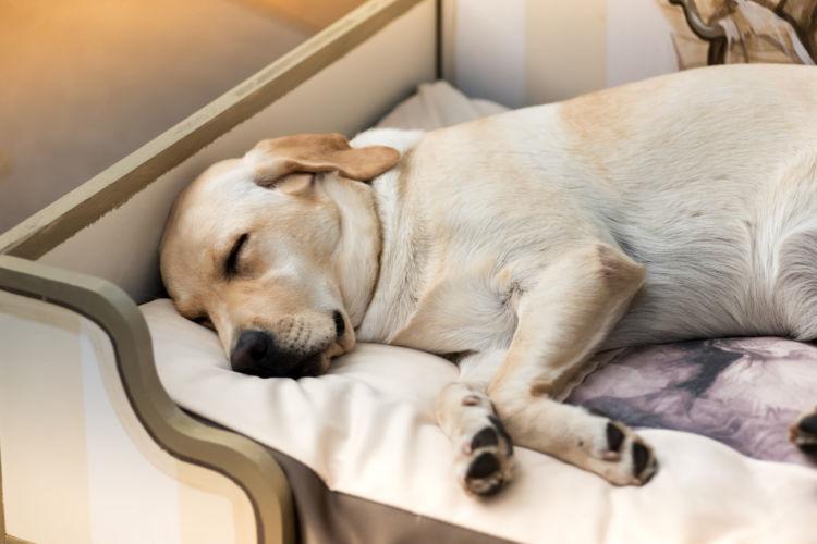【獣医師監修】犬の老衰の年齢、兆候や症状(状態)は?かかりやすい病気、注意点、予防方法は?