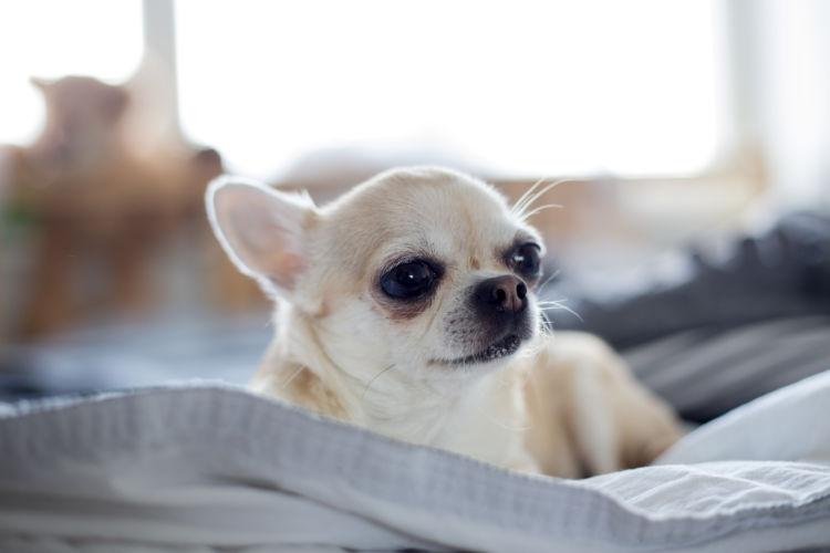 犬 高齢期 考え方