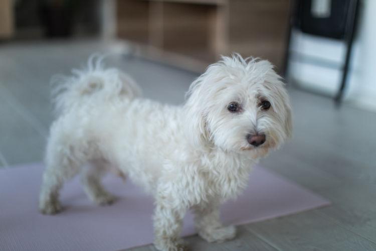 老犬の認知症【対策】①「環境・生活改善」