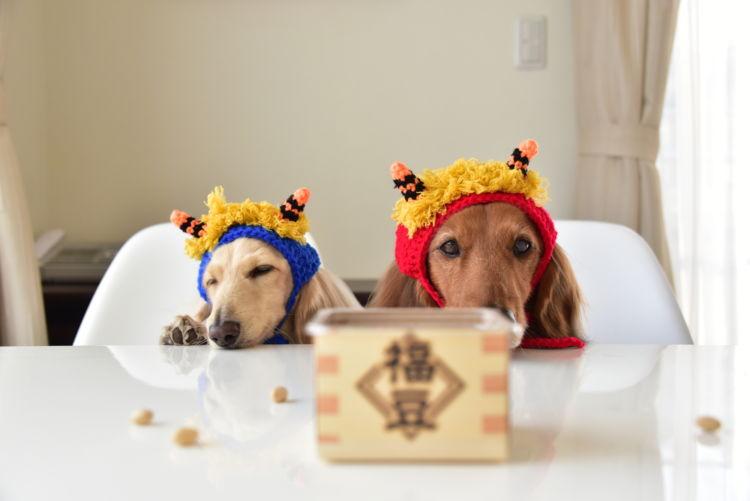 【獣医師監修】犬が大豆(生)を食べても大丈夫?ダメ!?豆まきや節分の豆は?アレルギー、下痢に注意!