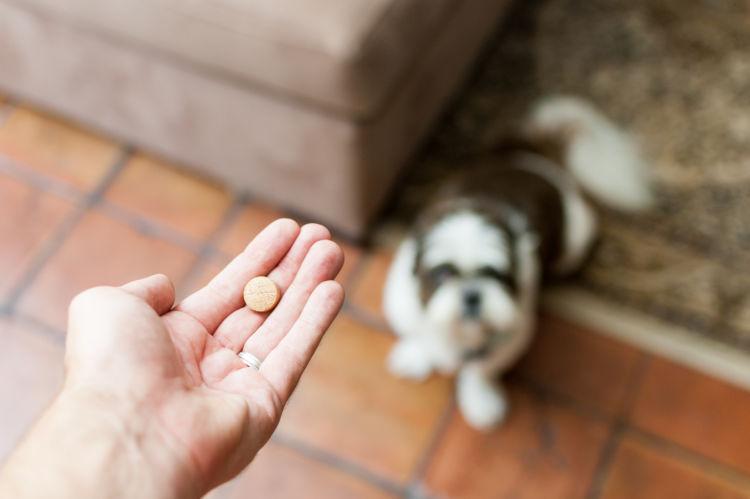 犬 特発性てんかん 発作 投薬