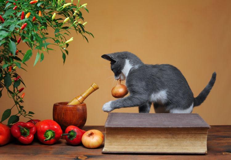 猫 玉ねぎ 玉ねぎ中毒
