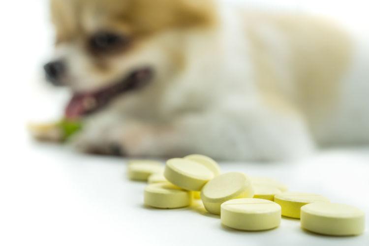 「玉ねぎ」誤飲治療法⑤【抗酸化物質の投与】