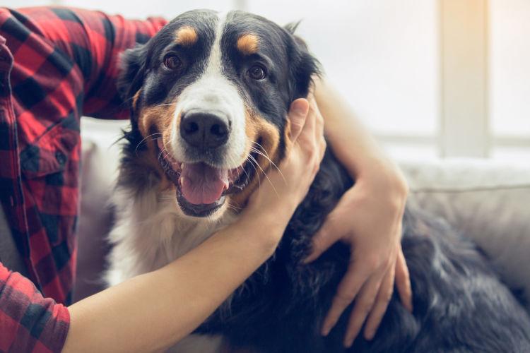 愛犬 健康 守る 飼い主