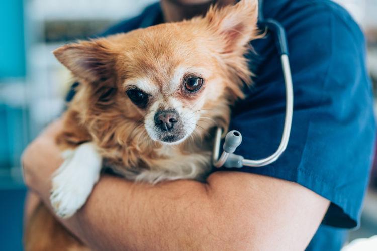 犬のネギの誤食【応急処置・対処法】は?