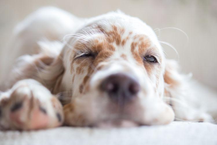 犬にとって危険(中毒)な食べ物【一覧】(ぶどうなど13種類)