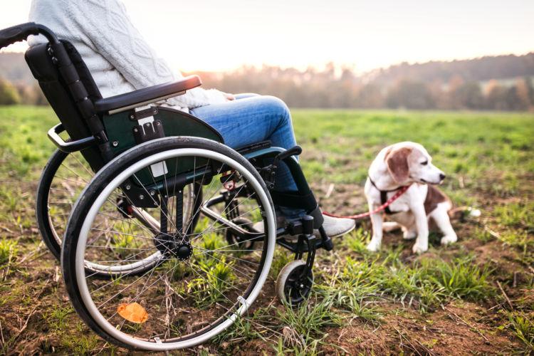 犬と人の【年齢換算】