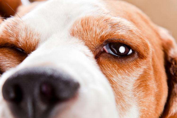 老犬 痙攣 原因
