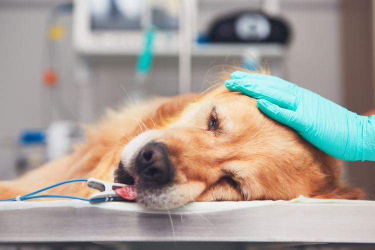 老犬 てんかん 痙攣 動物病院