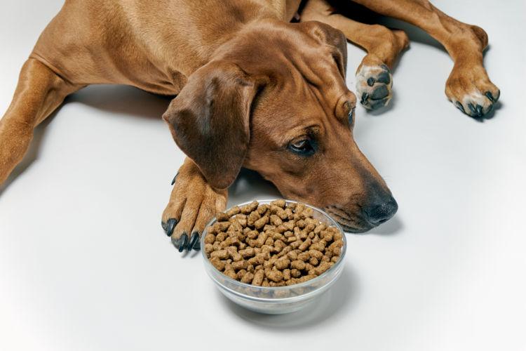 老犬 ご飯 食べない 原因