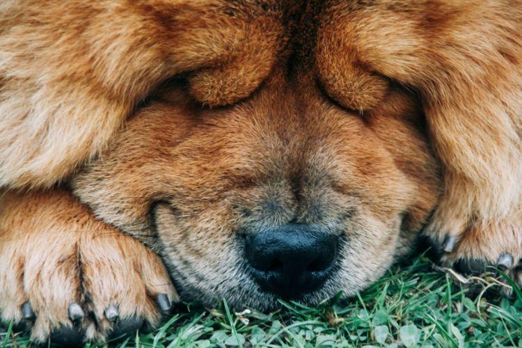 犬の頭が震える主な病気①【甲状腺機能低下症】
