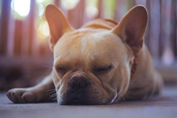 犬が元気がなくなった原因①【物理的・精神的な疲労】