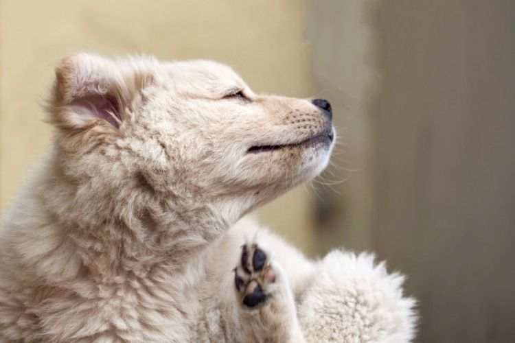 犬が自分の体を舐める・噛む「主な病気」④【アトピー性皮膚炎】