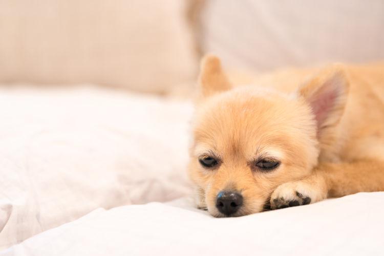 老犬 便秘 原因 病気