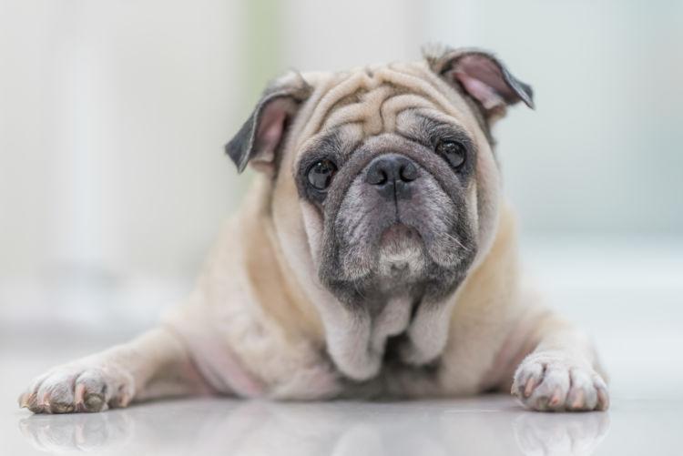 老犬の便秘【考えられる病気】