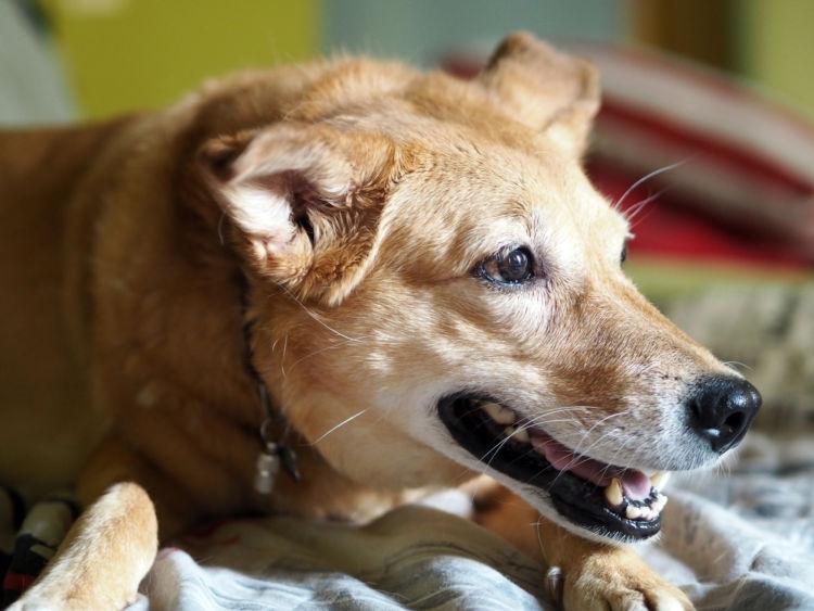 老犬 便秘 治療