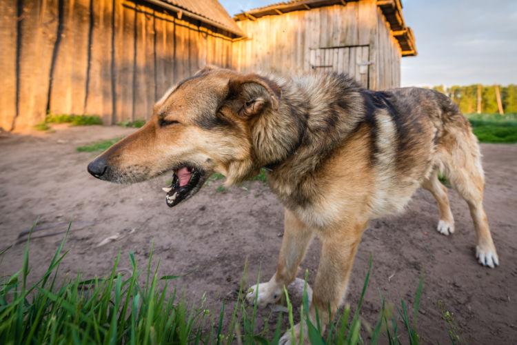 老犬が吐く(嘔吐)【考えられる病気は?】