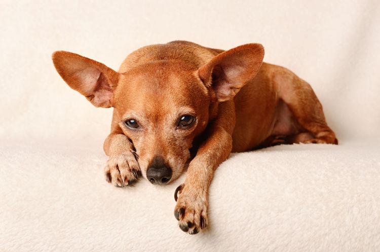 老犬 嘔吐 検査