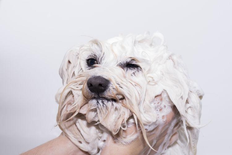 【老犬のシャンプー】嫌がる理由③【性格の問題】