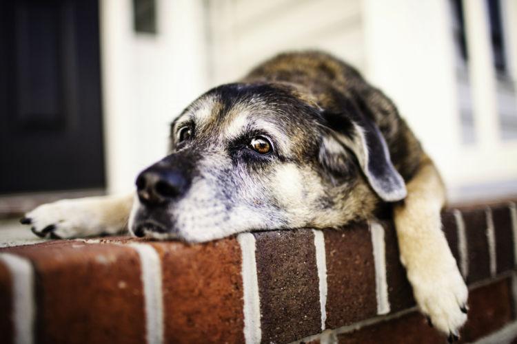 老犬 てんかん 治療