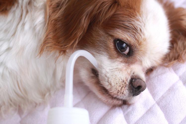 老犬 寝たきり 水分補給
