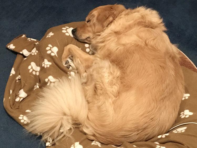 老犬 寝たきり 関節ケア