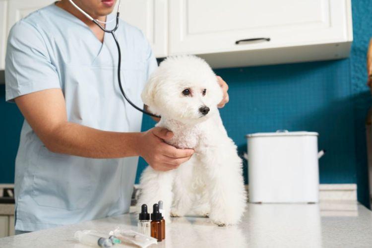 老犬の吠える予防①【病気の予防・治療】
