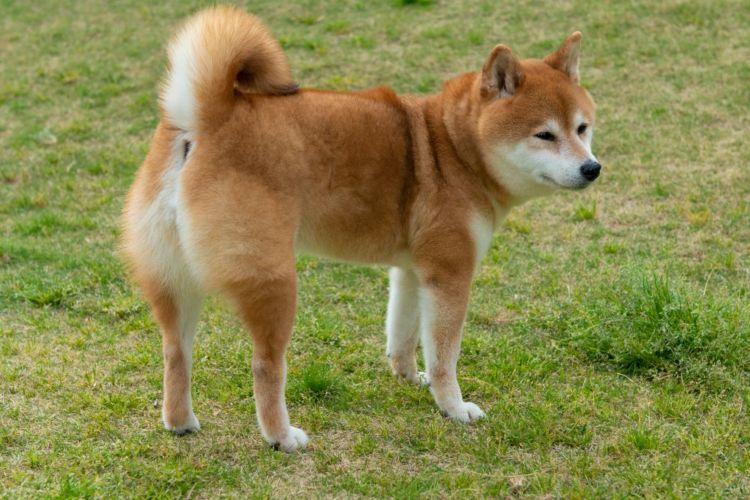 老犬の便秘の原因⑧【炎症・痛み】