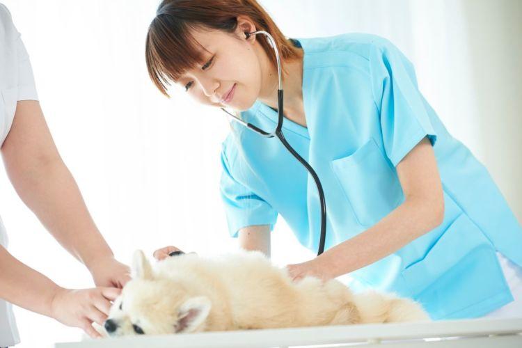 老犬の便秘【治療方法・治療費】