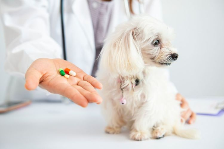老犬 便秘 治療 薬