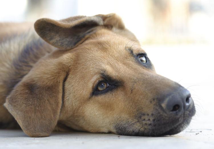 キシリトールを誤食した場合の応急処置と対処法④【動物病院に犬の今の状態を伝える】