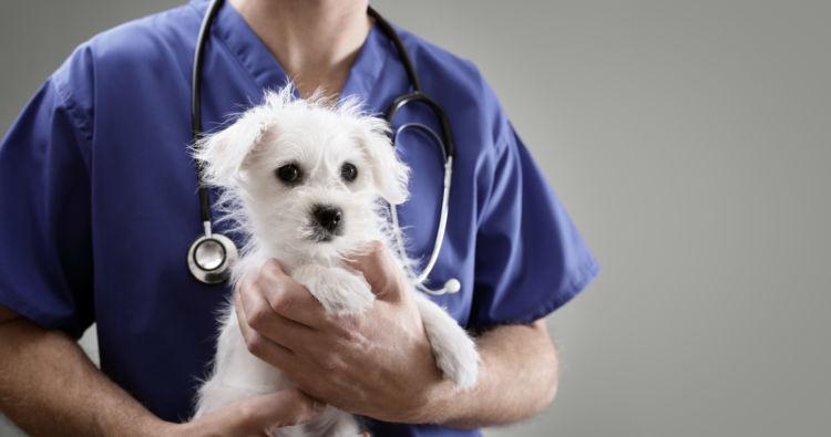 犬に「アボカド」が危険な理由②【膵炎(すいえん)】