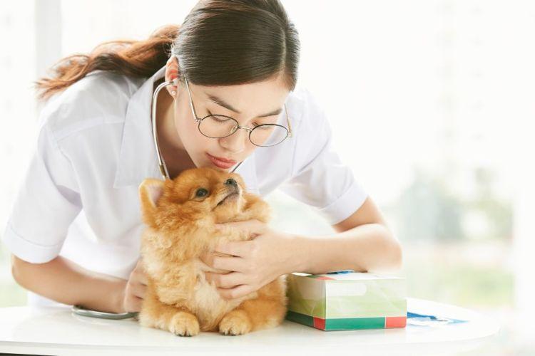 いちじくを誤食した場合の応急処置と対処法④【応急処置は獣医師の指示に従う】