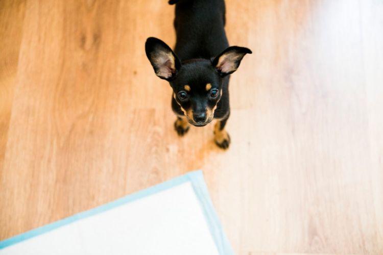 犬のトイレ(排泄)「しつけ」【まとめ】