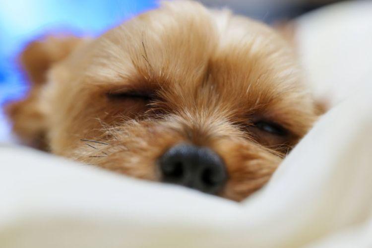 なぜ、犬に「キシリトール」を食べさせてはダメ?理由は?