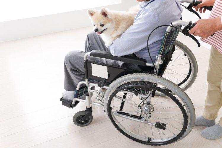 老老介護 飼い主 犬 高齢