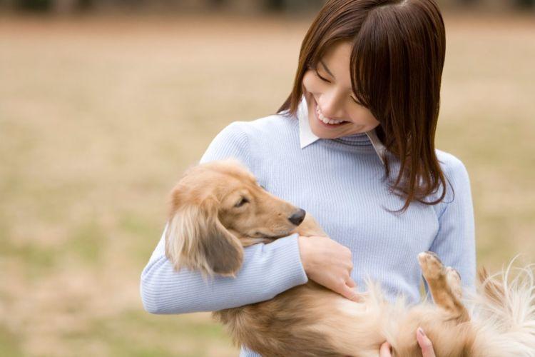 老犬介護  ペットシッター