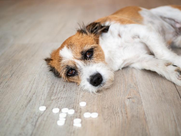 犬の「薬」の誤飲【対処方法と応急処置は?】