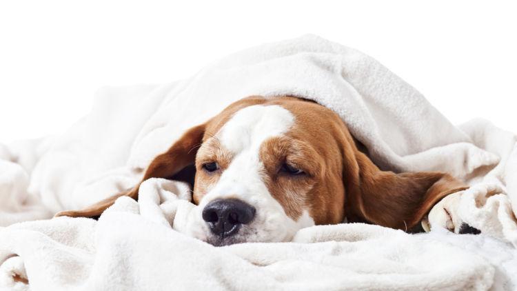 犬 非ステロイド性消炎鎮痛薬 誤飲