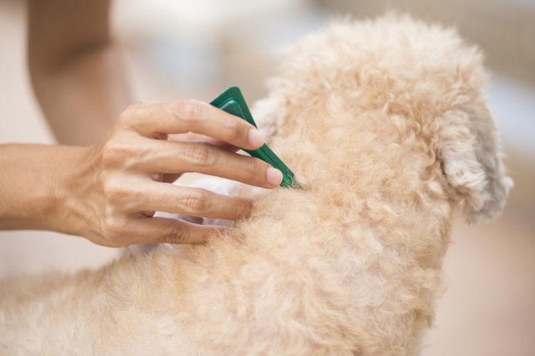 犬のノミ・ダニ予防薬「種類・回数は?」②【外用薬(スポット剤)】