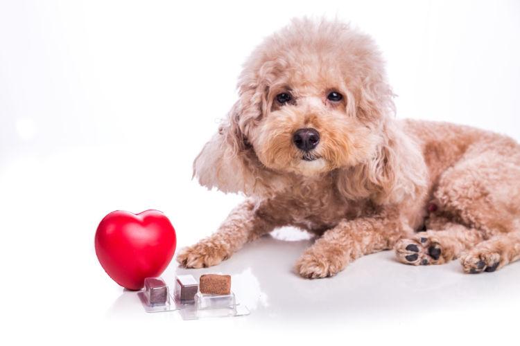 犬の予防薬【フィラリア予防薬】