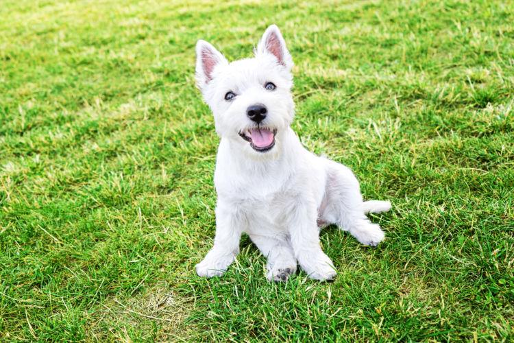 犬のノミ・ダニ予防薬【まとめ】