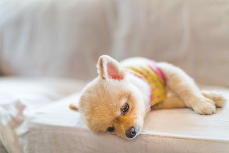 犬のフィラリア予防薬「注意点」④【副作用の注意】