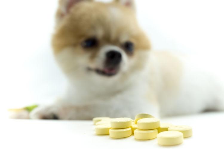 犬 嘔吐 人間用の薬
